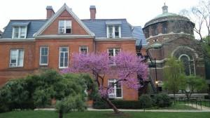 コロンビア大学の桜